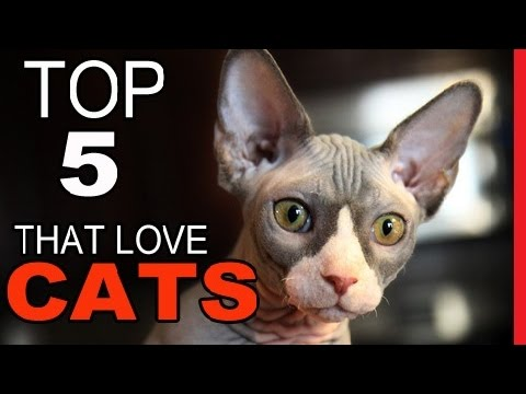Top 5 Cat Breeds That Love To Chat