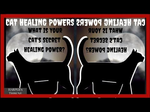 cat-healing-powers-(what-is-your-cat-s-secret-healing-power)