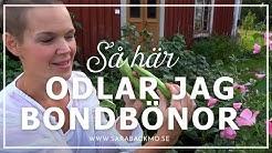 Så här odlar jag bondbönor