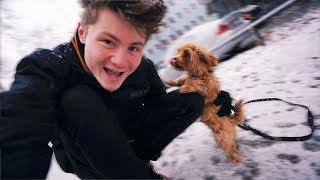 Alfies erster Schnee!