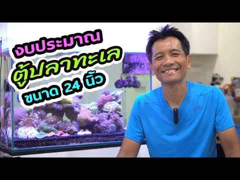 ตู้ทะเล EP22 : งบประมาณตู้ปลาทะเล ขนาด 24 นิ้ว ขยี้อุปกรณ์ทีละชิ้น