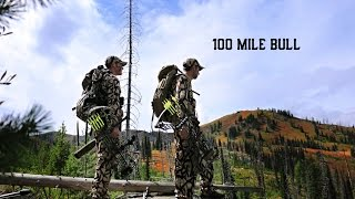 100 Mile Bull - Top Priority Hunting