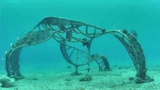 Living Sea Sculpture Live Stream