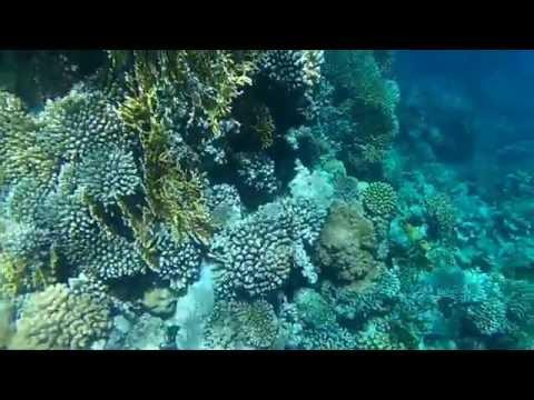 Snorkeling at Ras Mohamed Sharm el-Sheikh