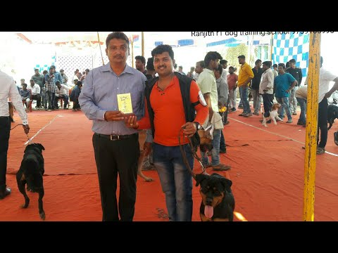 Rottweiler & other breed dogs show in karntaka