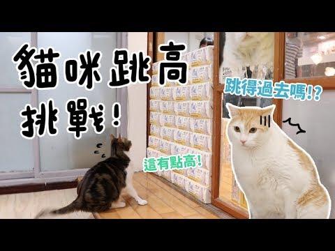 【黃阿瑪的後宮生活】貓咪跳高挑戰!