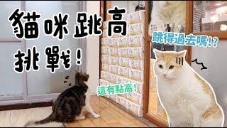 黃阿瑪的後宮生活-貓咪跳高挑戰