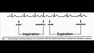 Respiratory Sinus Arrhythmia: Resting Pulse with a StethMic