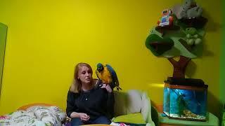 Воспитание большого попугая: дополнение / как отучить кусаться попугая: содержание большого попугая