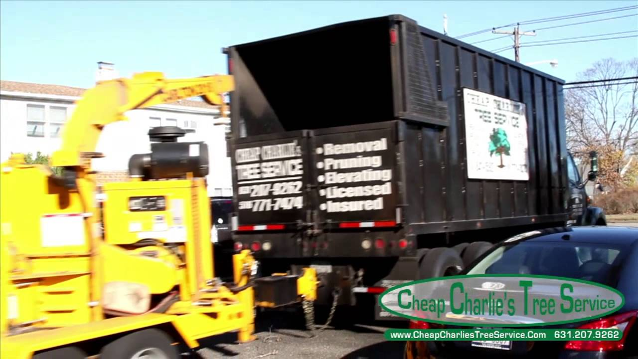 Cheap Charlie S Tree Service Tree Removal Youtube