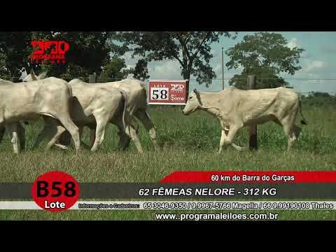 LOTE B58