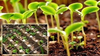 Как посадить рассаду в упаковку из под яиц (перцев, томатов, бархатцев и пр.)