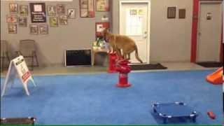 Fun Dog Training Exercises