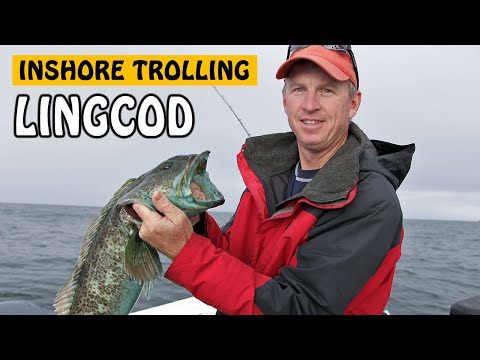 Inshore Lingcod Tactics | Fishing With Rod