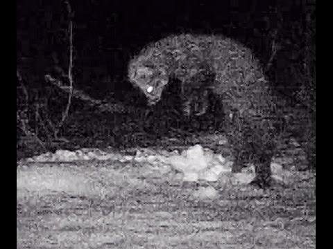 Andover's Wildlife After Dark