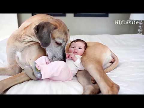 যেসব প্রানী তাদের মালিকের জীবন বাচিয়েছিল    Real Hero Pets Who saves Humans Life Re-uploaded