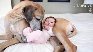 জীবনের বিনিময়ে যেসব প্রানী মালিকের জীবন বাচিয়েছিল || Real Hero Pets Who saves Humans Life Reuploaded