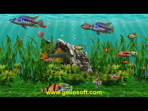 3D Fish School Screensaver - Review