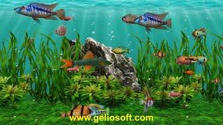 3D Fish School Screensaver - Review