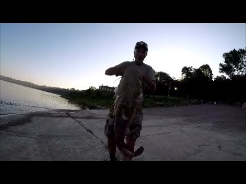 Big Flathead Catfish Off The Boat Ramp, Mississippi River