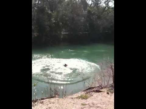 Jackson Diving At Barton Springs Part 3