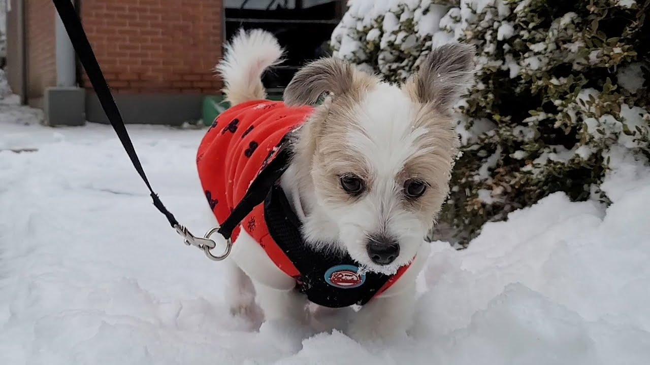 🐶검은 콩 3개 와 눈|Dog and snow❄