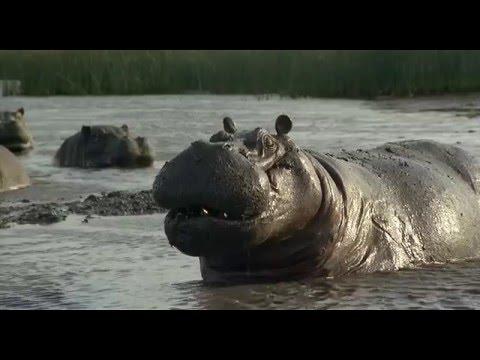 Io sto con gli ippopotami 2 il trailer del film 5