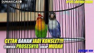 Download lagu TIPS LOVE BIRD : CETAK BAHAN JADI KONSLET!!! Ternyata PROSESNYA Cukup MUDAH
