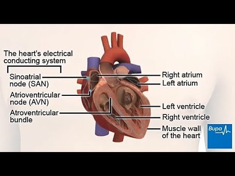 How your heart works the electrical conduction system youtube how your heart works the electrical conduction system ccuart Images