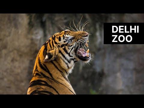 Zoo - Delhi