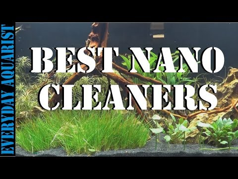 Best Cleaners For Nano And Small Aquariums