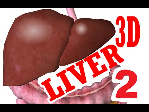 Liver Anatomy And Histology - part 2