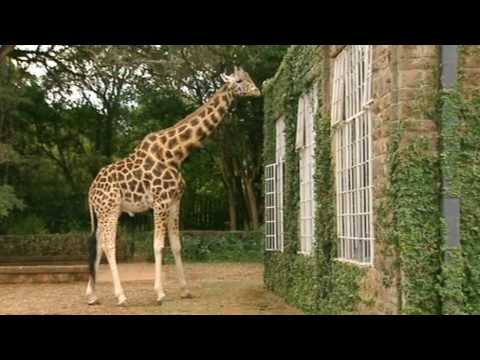 Thumbnail: Breakfast with Giraffes