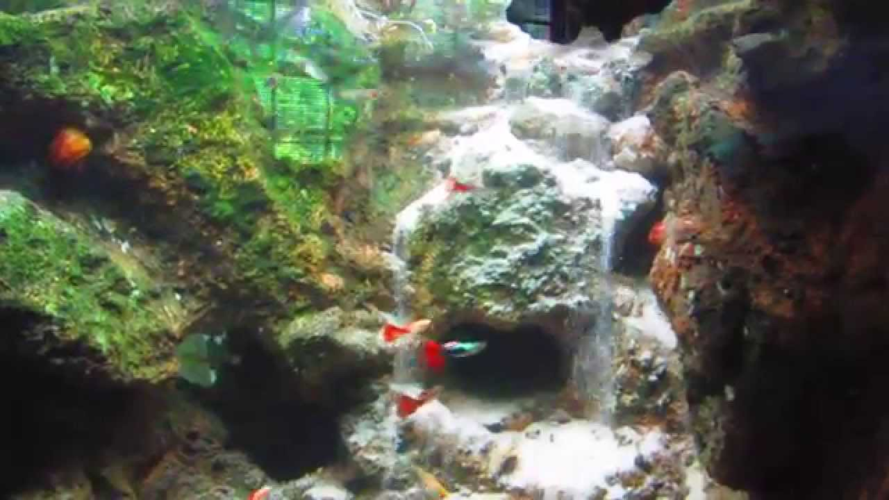 500 Gallon Fish Tank with Underwater Waterfall - YouTube