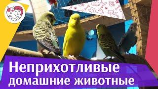 5 самых неприхотливых домашних животных на ilikepet