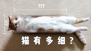 [Cat Live] An experiment for cats to prove they are flexible enough to get through tubes