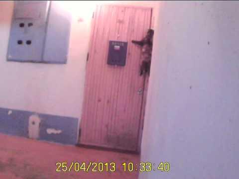видео: Кошка звонит в звонок к себе домой!