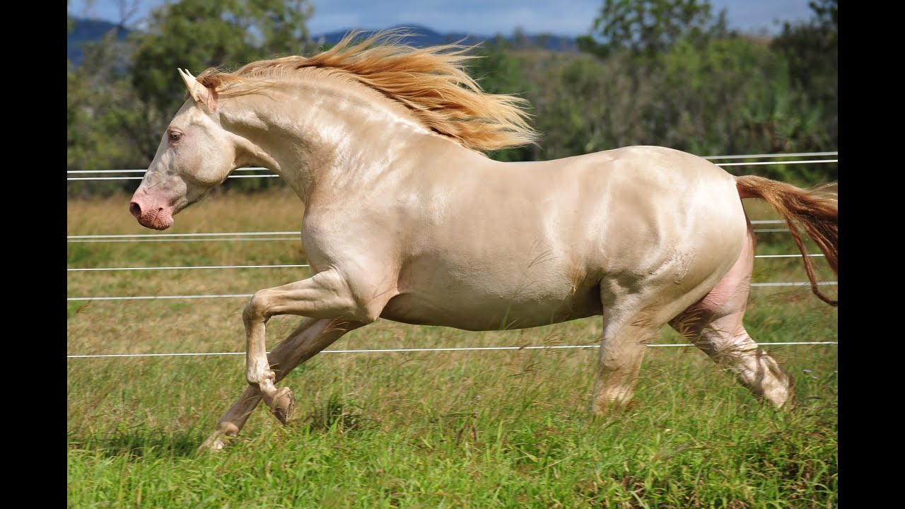 Horse Talk Tv Road Tests The Andalusian Horse Majestic