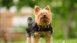 Die 10 süßesten Hunderassen der Welt