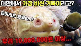 천만원 거북!! 대만 최대 파충류샵엔 어떤 동물이??