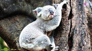 أكثر 10 حيوانات نوماً على سطح الأرض | حيوانات لا تقاوم النوم !