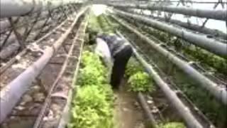 saygin ekolojik tarım
