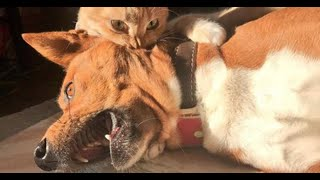 ТОП Смешные видео про котов и собак ♥ TOP Funny videos about cats and dogs