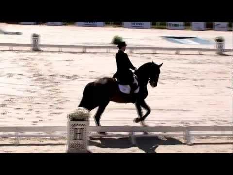 Manuel Tavares de Almeida Neto e Viheste - Adestramento brasileiro em ascensão - Horse Show Brasil