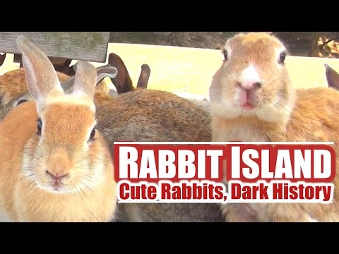 Japan's Rabbit Island: Cute Rabbits, Dark History