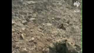 Battle of Tora Bora (2001) | A Day That Shook the World
