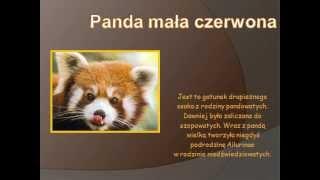 Ginące zwierzęta Azji Południowo-Wschodniej - Weronika, Gabrysia