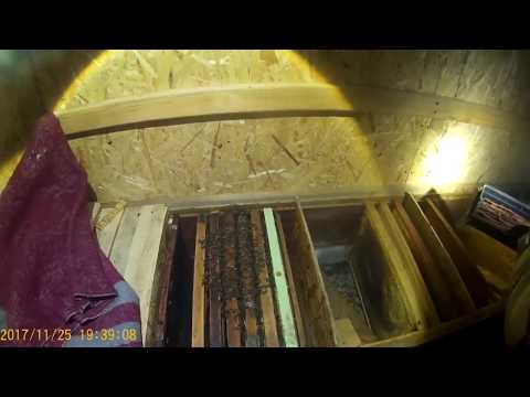 Разведка. Бермудский лес.из YouTube · Длительность: 28 мин32 с  · Просмотры: более 396000 · отправлено: 21/05/2017 · кем отправлено: КРИМИНАЛ ТВ