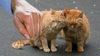 Жестокое обращение с животными! Жесть!