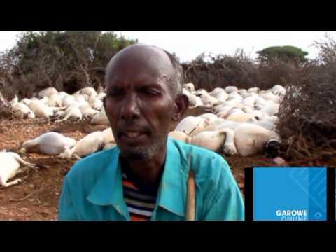 Somalia: Video about Puntland Disaster Nov, 2013